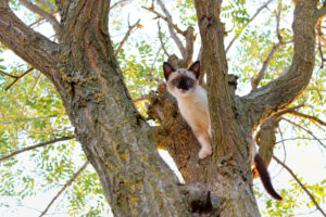 Small cat stuck in a tree