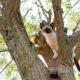Small cat stuck in a tree