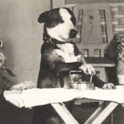 Dogs sharing housework chores